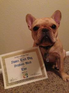 The day we received Thor's certificate and collar charm.