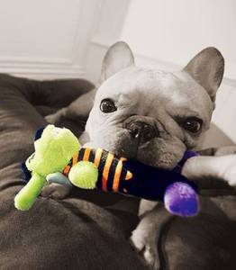 Photo curtesy of Petsmart.com